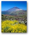 Tenerife  » Click to zoom ->